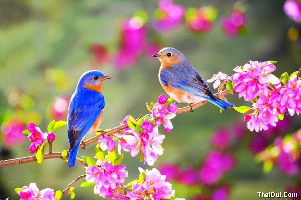 thơ tháng giêng và mùa xuân